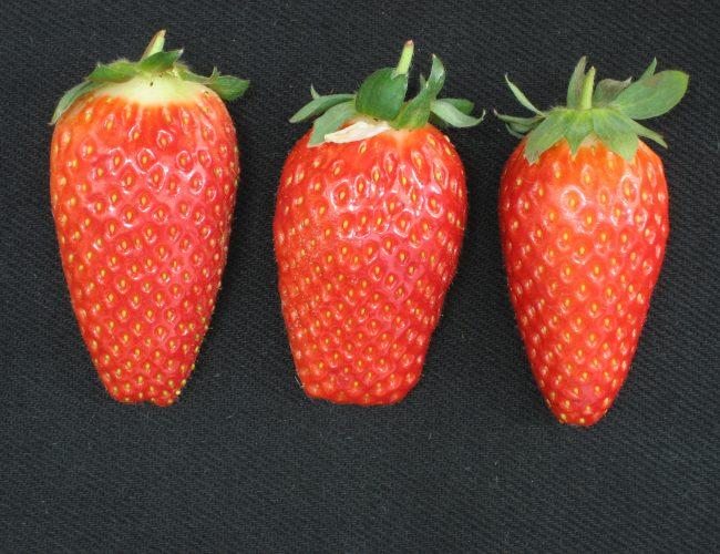 TAMIR fruits 001