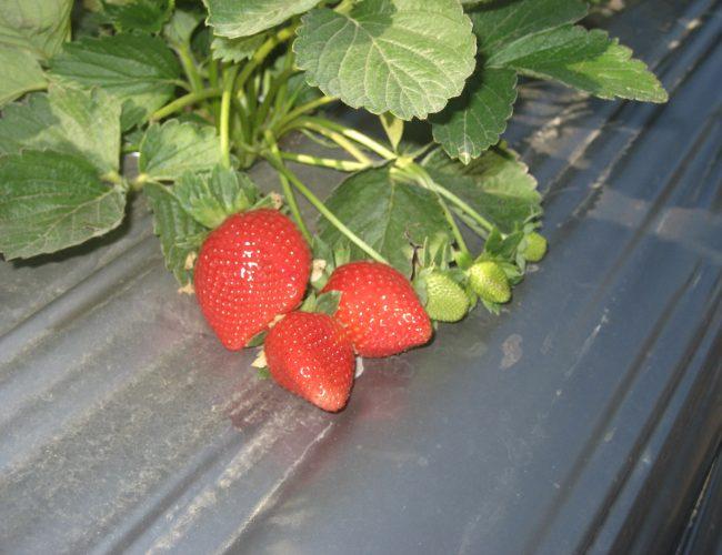 Yasmin plant Dec 2009 029